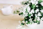 清新淡雅白色花卉圖片