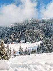 冬季雪松樹林圖片