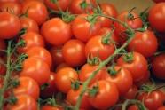 成熟番茄西紅柿圖片